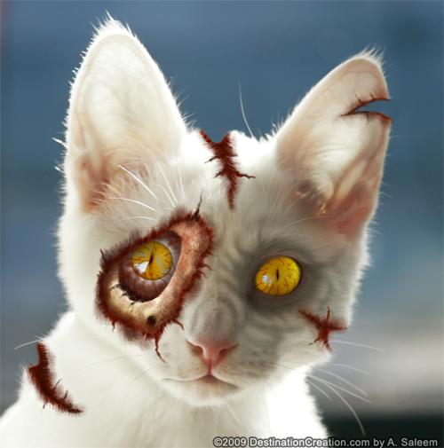 hello_zombie_my_zombie_kitten_09.jpg